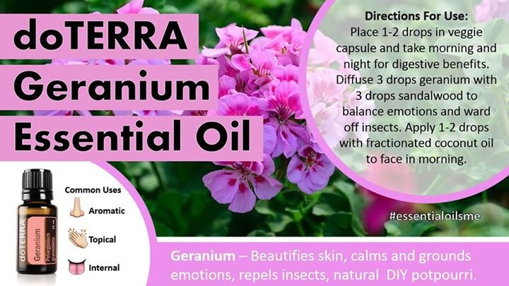 Geranium – The Oil of Love & Trust